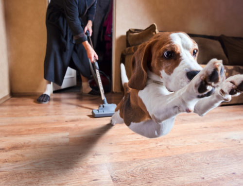 Top Tips on How to Keep a House Clean with Dogs